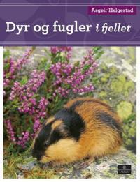 Dyr og fugler i fjellet - Asgeir Helgestad   Ridgeroadrun.org