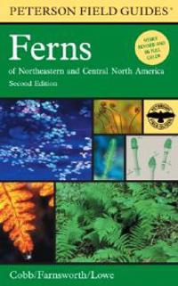 Ferns: Of Northeastern and Central North America