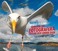 Konsten att fotografera fåglar och andra djur