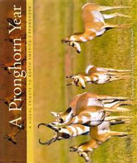 A Pronghorn Year: A Visual Tribute to North America's Pronghorn