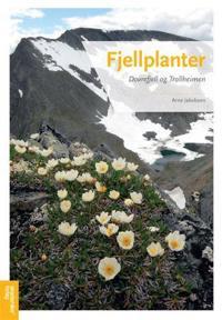 Fjellplanter; Dovrefjell og Trollheimen - Arne Jakobsen | Ridgeroadrun.org