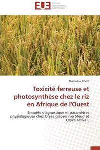 Toxicite Ferreuse Et Photosynthese Chez Le Riz En Afrique de L'Ouest