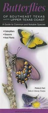 Butterflies of Southeast Texas & the Upper Texas Coast: A Guide to Common & Notable Species