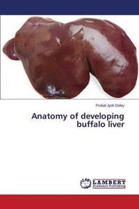Anatomy of Developing Buffalo Liver