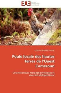 Poule Locale Des Hautes Terres de L Ouest Cameroun