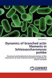 Dynamics of Branched Actin Filaments in Schizosaccharomyces Pombe