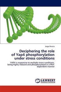 Deciphering the Role of Yap4 Phosphorylation Under Stress Conditions