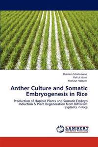 Anther Culture and Somatic Embryogenesis in Rice