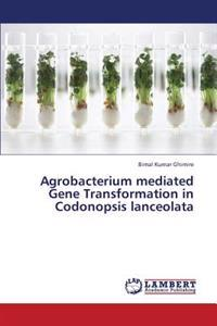 Agrobacterium Mediated Gene Transformation in Codonopsis Lanceolata