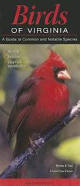 Birds of Virginia: A Guide to Common & Notable Species