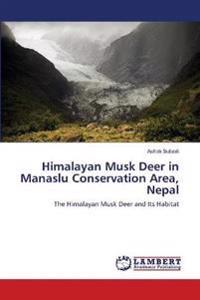 Himalayan Musk Deer in Manaslu Conservation Area, Nepal