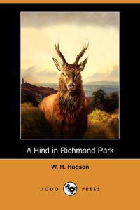 A Hind in Richmond Park