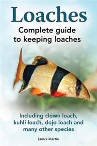 Loaches