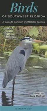 Birds of Southwest Florida: A Guide to Common & Notable Species