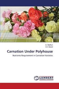 Carnation Under Polyhouse