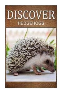 Hedge Hogs - Discover: Early Reader's Wildlife Photography Book