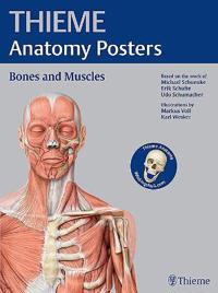 Thieme Anatomy Posters