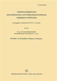 Die Kultur Von Scenedesmus Obliquus in Abwasser
