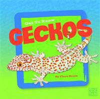 Get to Know Geckos