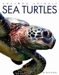 Amazing Animals Sea Turtles