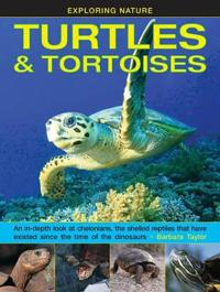 Exploring Nature: Turtles & Tortoises: An In-Depth Look at Chelonians, the Shelled Reptiles That Have Existed Since the Time of the Dinosaurs