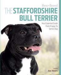 The Staffordshire Bull Terrier: Your Essential Guide from Puppy to Senior Dog