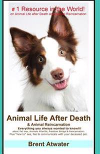 Animal Life After Death & Animal Reincarnation: Pet Loss Answers for All Your Heart's Questions!