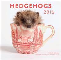 Hedgehogs 2016 Calendar