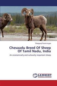 Chevaadu Breed of Sheep of Tamil Nadu, India
