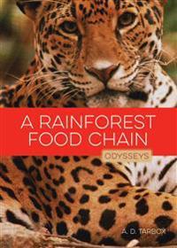 A Rainforest Food Chain