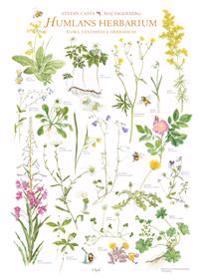 Humlans herbarium 1 affisch