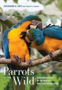 Parrots of the Wild