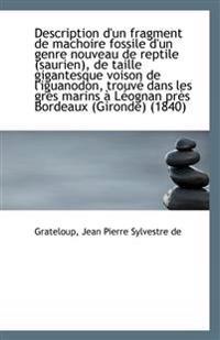 Description D'Un Fragment de Machoire Fossile D'Un Genre Nouveau de Reptile (Saurien), de Taille Gig