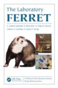 Laboratory Ferret