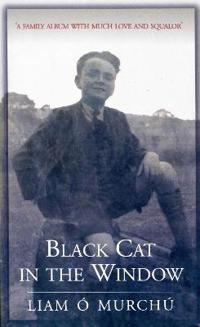 Black Cat in the Window