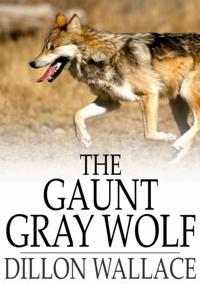 Gaunt Gray Wolf