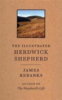 Illustrated herdwick shepherd