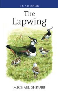 Lapwing