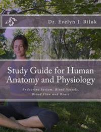 Study Guide for Human Anatomy and Physiology: Endocrine System, Blood Vessels, Blood Flow and Heart