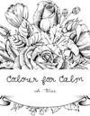 Colour for Calm