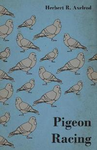 Pigeon Racing