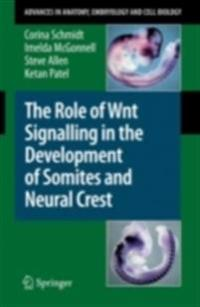 Role of Wnt Signalling in the Development of Somites and Neural Crest