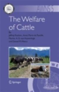 Welfare of Cattle