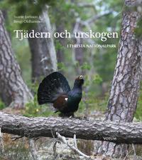 Tjädern och urskogen : i Tyresta nationalpark
