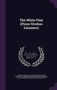 The White Pine (Pinus Strobus Linnaeus)
