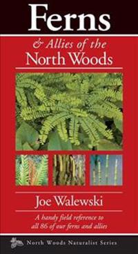 Ferns & Allies of the North Woods