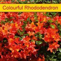 Colourful Rhododendron 2016