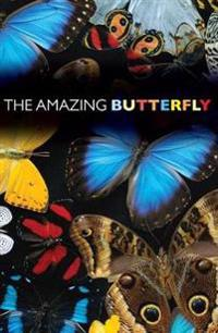 The Amazing Butterfly (Pack of 25)