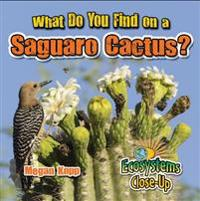 What Do You Find on a Saguaro Cactus?