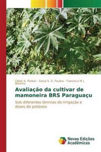 Avaliacao Da Cultivar de Mamoneira Brs Paraguacu